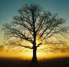 tree_menu